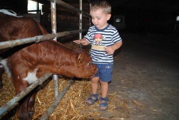 Familienurlaub in Ramsau Mithelfen am Bauernhof