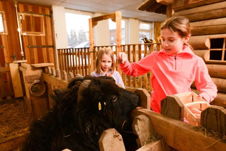 Schaf füttern Kinder Bauernhof Ramsberger Kahr