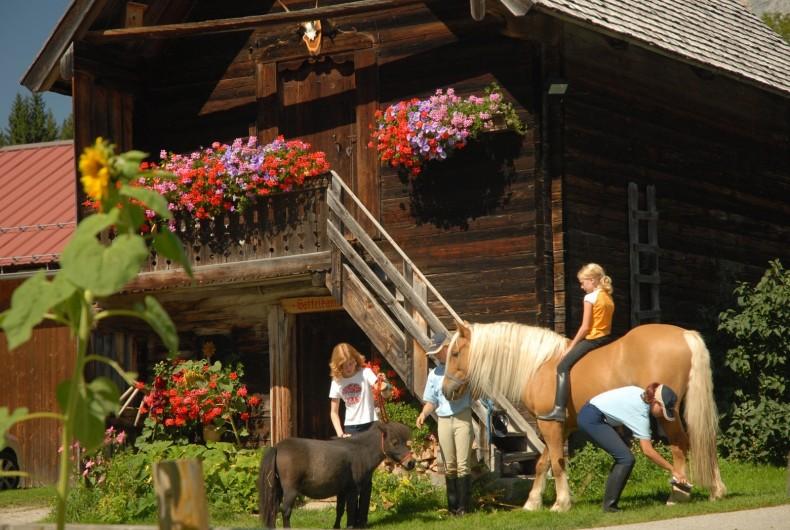 Pferd und Hof_Hoeflehner