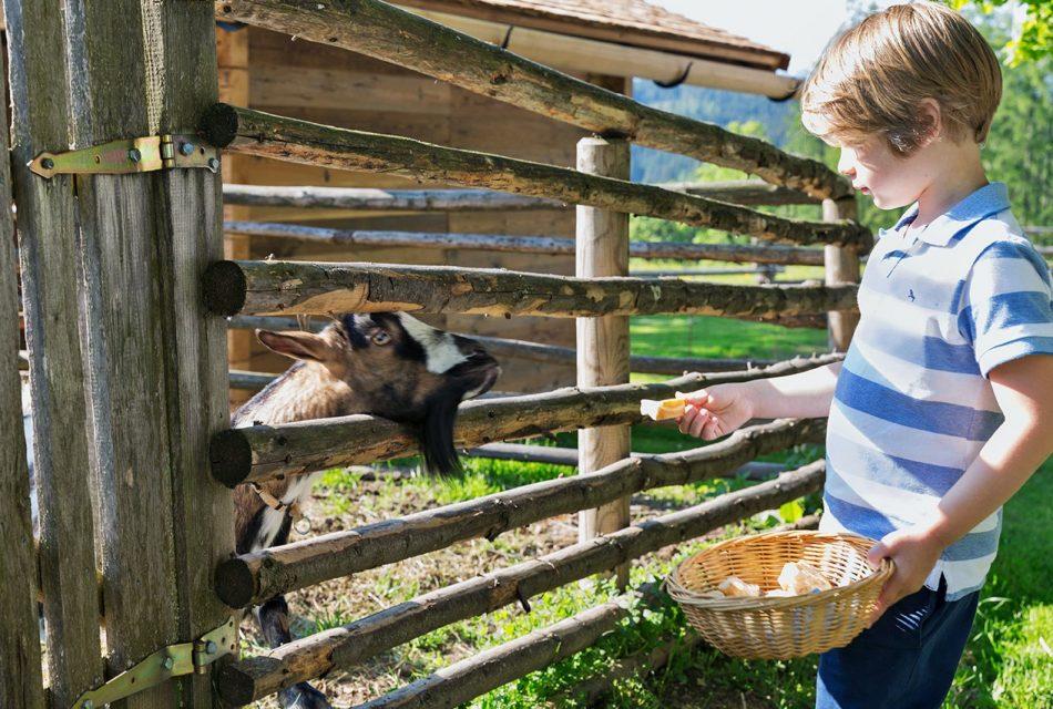 Ramsbergerhof Ziegen am Bauernhof
